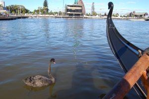 Gondola Swan May 2016
